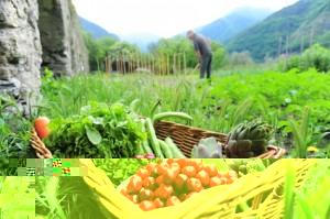 Solidarische Landwirtschaft - Wirtschaften mal menschlich